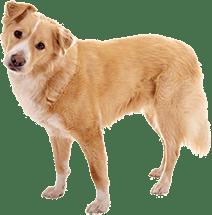 Hundebestattung