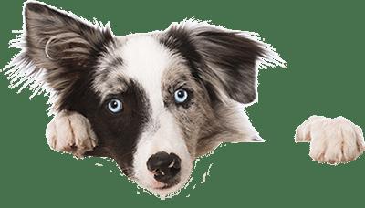 Bestattung für Hunde